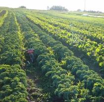 agricultura-huidu