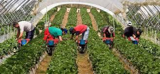 munca-in-agricultura-socinro