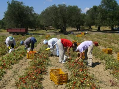munca-agricultura